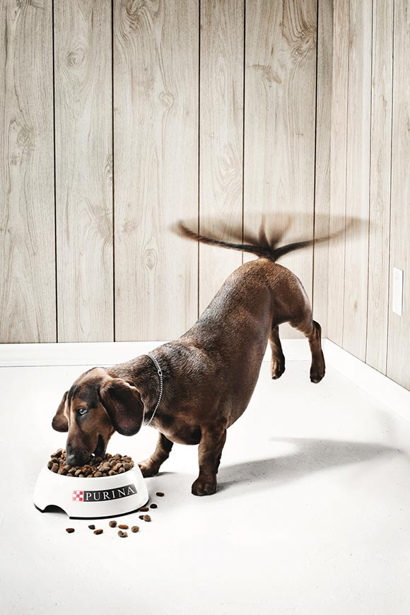 Purina: The Dog
