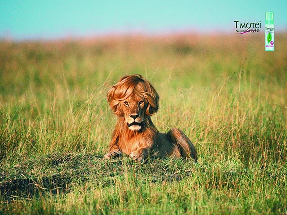 Timotei Styling Mousse: Lion