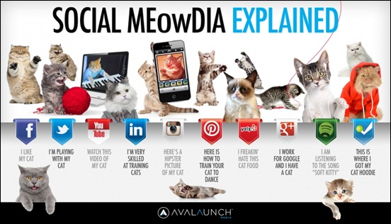 so9cial-meowdia-explained