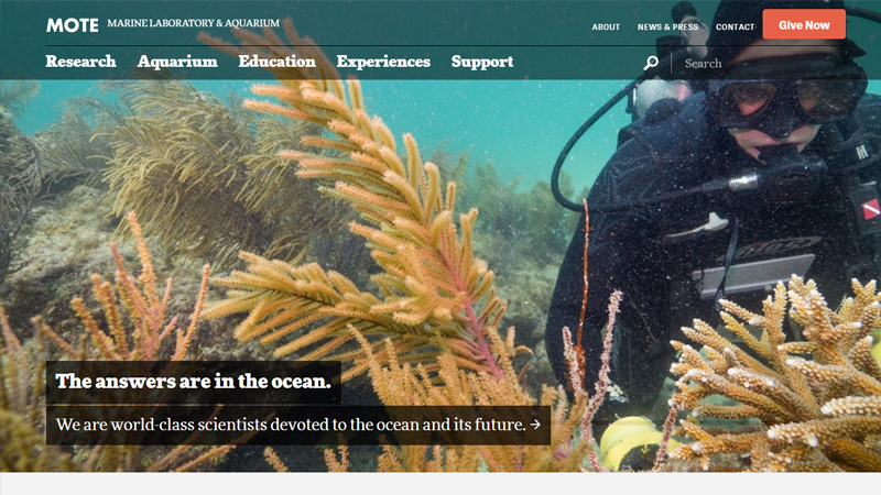 mote marine laboratory and aquarium website